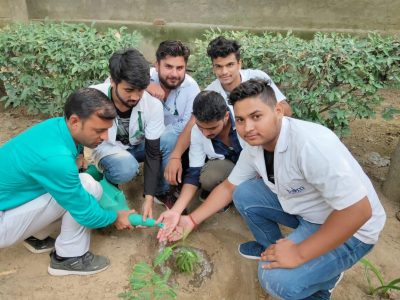 tree plantation pictures_page3_image2
